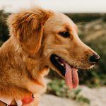 Den ultimative tjekliste før køb af hund