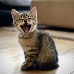 Find den bedste kattepension i Nordsjælland